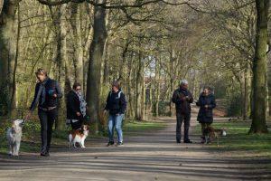 Gezellig wandelen met de honden